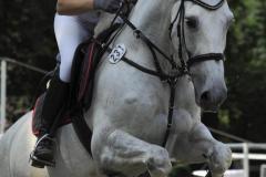 Pferde_CocoC_Foto_Waldhof_Schulte_Spechtel_003
